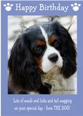 "Cavalier King Charles Spaniel-Happy Birthday - ""From The Dog"" Theme"